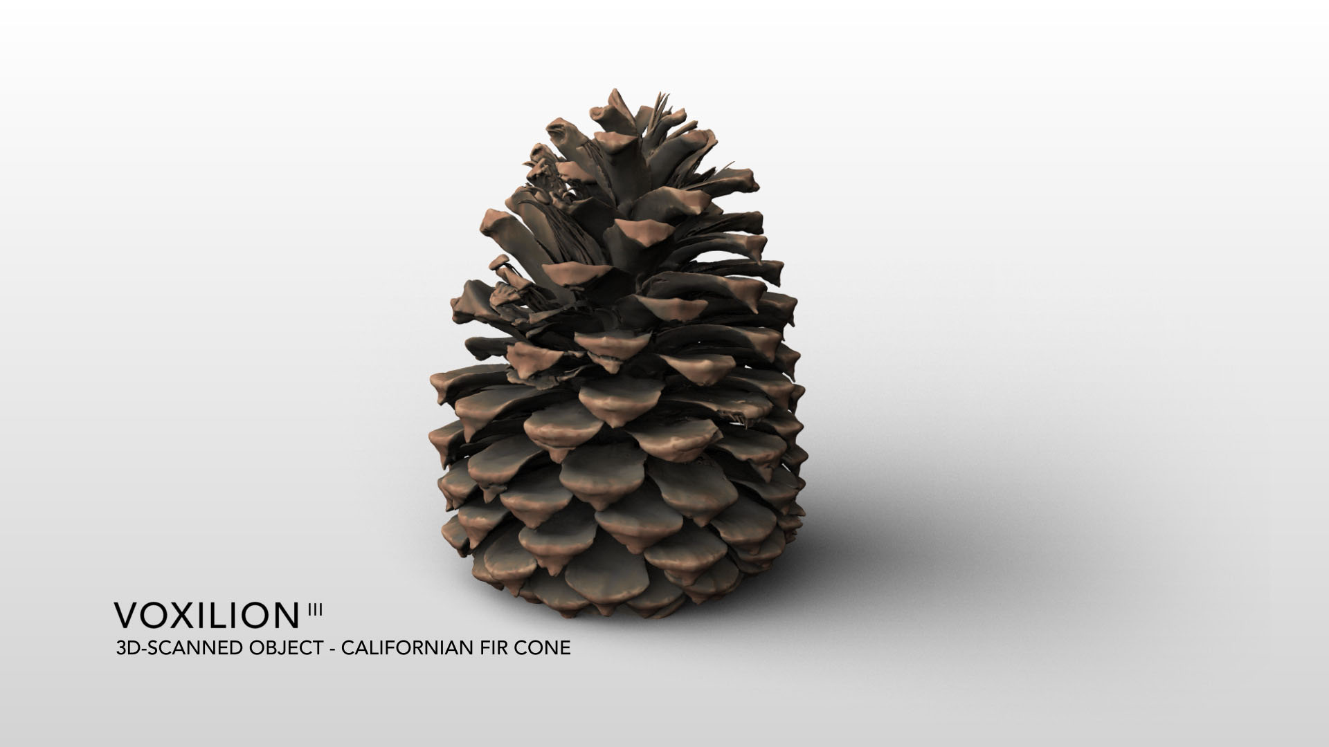 Californian Fir Cone